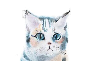 hand drawn watercolor painting of cute gray curious staring kitten, sitting pussycat aquarelle drawing.