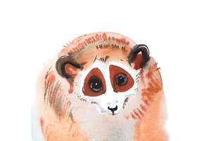 hand-drawn red-haired sitting looking lemur watercolor painting, aquarelle image of exotic furry animal