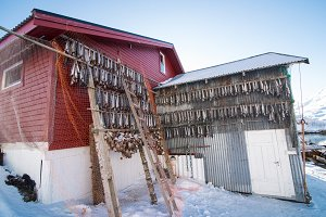 Drying salmon in Norway