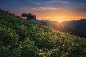 Sunset at mount Kosarische TIF