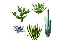 Cactuses and succulents set. Plants of desert