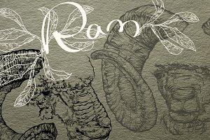 Hand drawn Ram