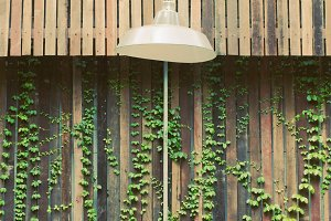Lamp hanging outdoor with ivy wall