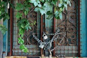 Vintage Door Plant