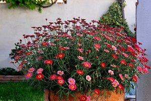 Pot full of flower in the corner