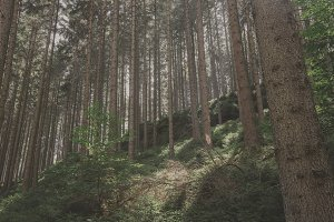 The Forest #03