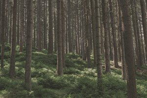 The Forest #07
