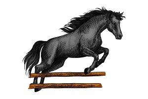 Horse jumping for equine horserace sport symbol