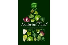 Natural food poster of leafy salad greens