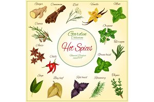 Herbs and hot spices vector poster