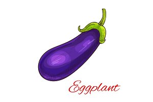 Eggplant vegetable vector isolated sketch
