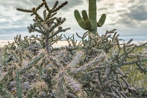 Sunset in Saguaro National Park Tucson