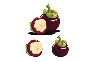 Mangosteen Fruit Realistic Vector