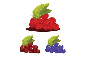 Grape Fruit Realistic Vector