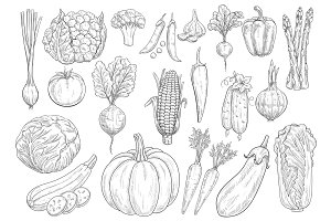 Vegetables vector sketch isolated icons