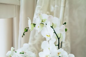 Romantic white orchid on vase floor. Close-up.