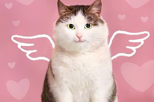 valentine card with fat smiling cat