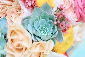 Succulent background vibrant