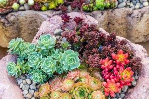 Stone planters with sedums