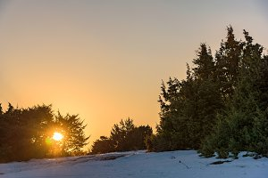 Orange sun shines through juniper