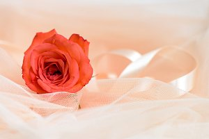 Red rose with fabric and ribbon