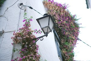 Street lamp and bougainvillea
