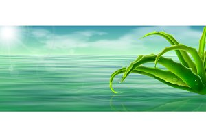 aloe vera on water surface background