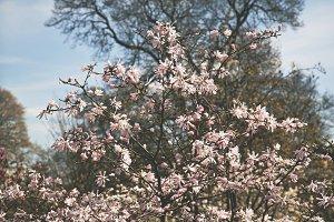 iseeyouphoto magnolia flowers 6