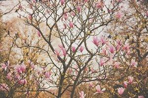 iseeyouphoto magnolia flowers 4