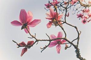 iseeyouphoto magnolia flowers 3