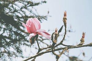 iseeyouphoto magnolia flowers 5