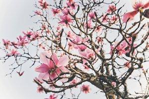 iseeyouphoto magnolia flowers 1