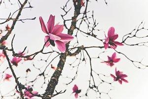 iseeyouphoto magnolia flowers 2