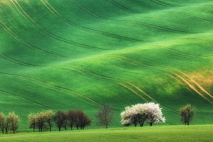 Trees against green fields in spring