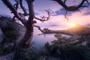 Old tree in crimean mountains