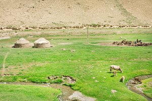 Farm with Yurta tents