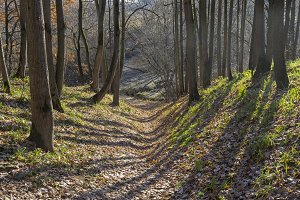 Small ravine in the autumn forest