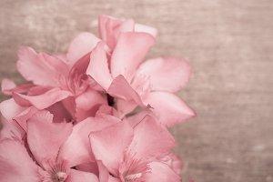 Pink oleander on wooden background