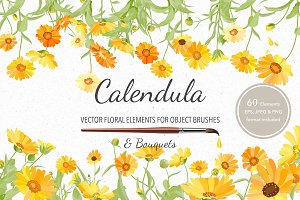 Vector object brushes. Calendula
