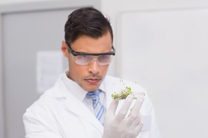 Scientist holding a petri dish with tests of plants