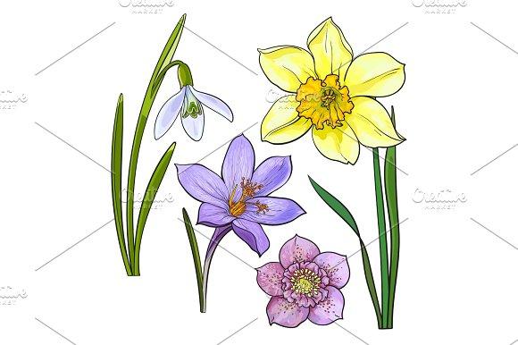 Cartoon Daffodil » Designtube