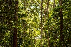 road through rain forest