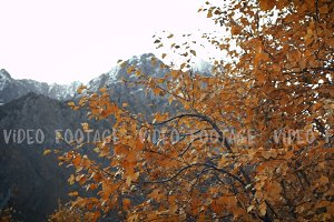 Orange autumn leaves in the wind on background of high mountains