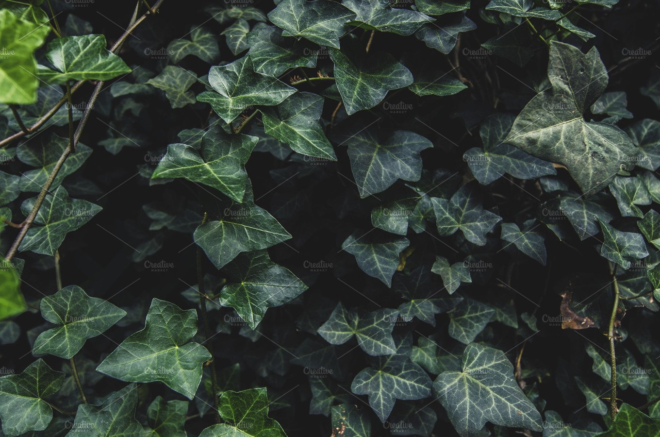 Dark ivy leaves carpet background nature photos creative market biocorpaavc Gallery