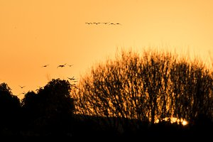 grus sunset