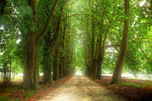 Footpath among trees