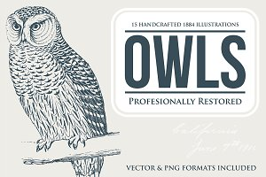 15 Owl Illustrations