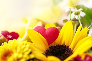 Spring concept with macro flower