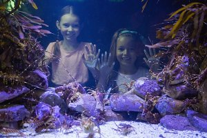 Cute girls looking at fish tank