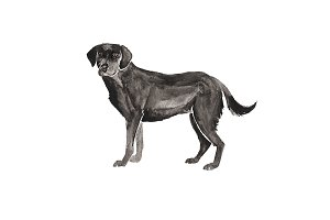 Watercolor Black Labrador Dog